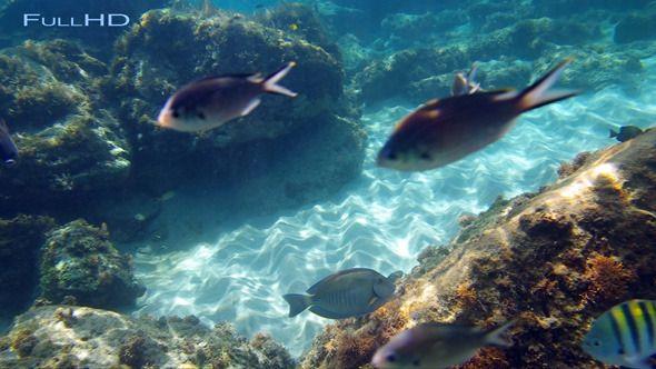 Underwater World. Underwater world of the Caribbean sea. #footages #underwater #caribbean #travel