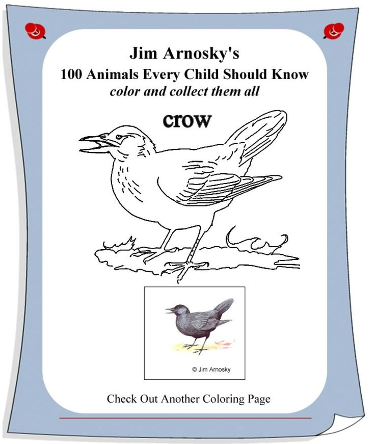 Crow coloring page sarah plain and tall pinterest for Sarah plain and tall coloring pages