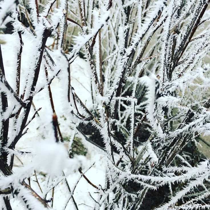 Zimo jesteś piękna i potrzebna ale już bym chciała żeby te gałązki pokrywały młode listki :) Kto tęskni za wiosną?