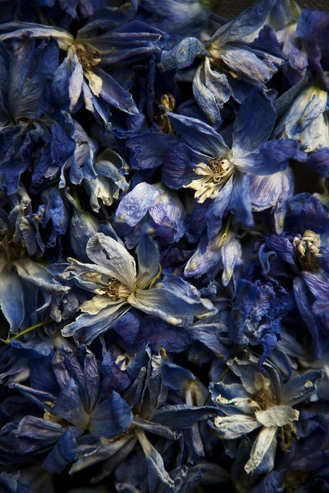❧ Couleur : Bleu Denim ❧