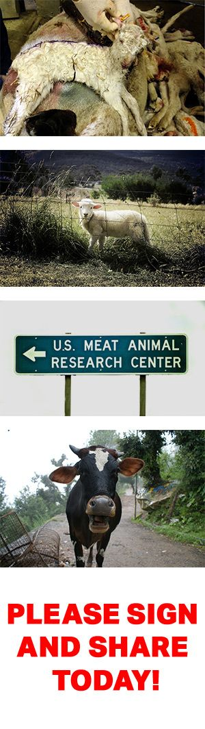 Network For Animals-Shut Down the U.S. Meat Animal Research Center!