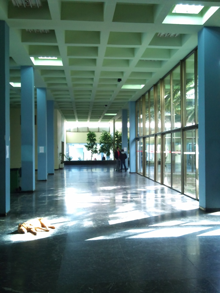 University of Patras, dog enjoying the sun.