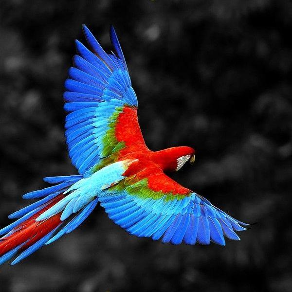Perroquet                                                                                                                                                                                 Plus