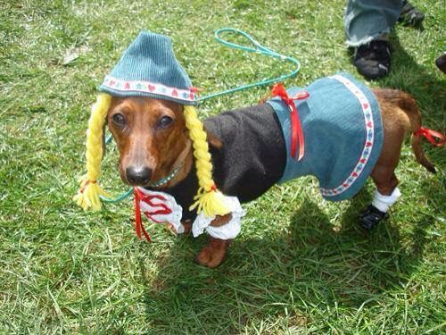 13 best Wiener Dog Costumes images on Pinterest ...