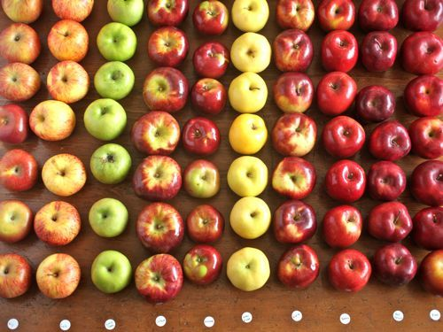 This is AMAZING!!!!! I was looking up which kind of apples are best for baking and came across this. This person scientifically tested 10 types of apples and posted their results!!!