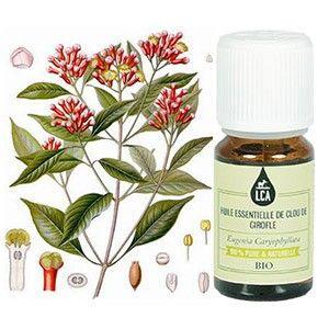 L'HUILE ESSENTIELLE DE CLOU DE GIROFLE BIO : L'huile essentielle de clou de girofle s'utilise à la fois sur le système digestif et hépatique. Elle calme les migraines. Le giroflier a des vertus stimulante et répulsive (mouches, mites). L'huile essentielle de clou de girofle peut également être utilisée en cuisine et en olfactothérapie. Lire plus concernant l'huile essentielle de girofle sur www.lca-aroma.com