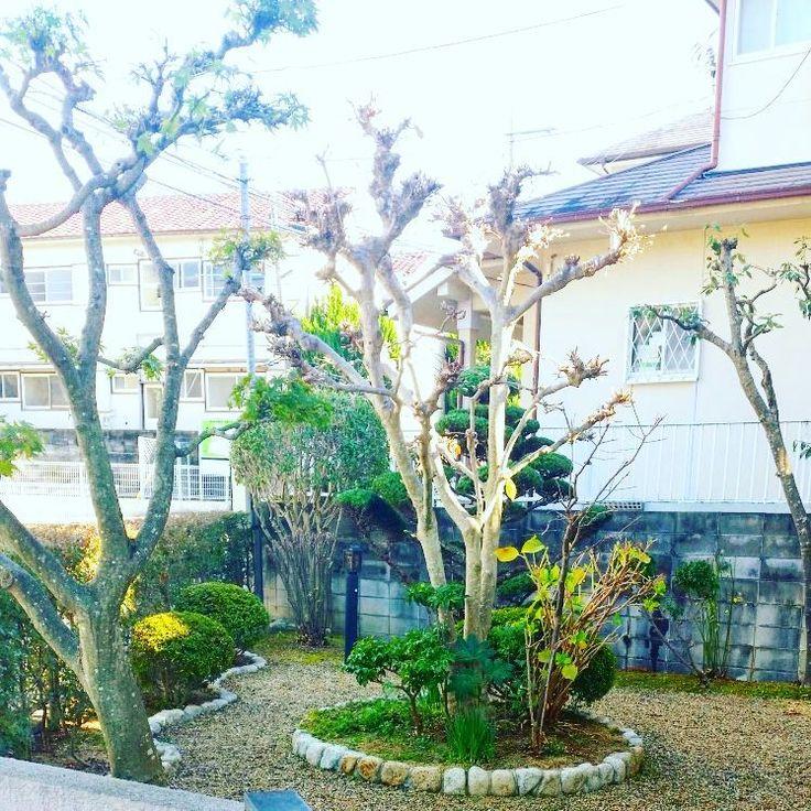 さっむい笑 明日からまた少し気温が上がるそうで 本日も個人宅 頑張った #造園 #造園業 #庭園 #個人宅 #庭 #モクレン #モミジ #アラカシ #カリン #アジサイ #金木犀 #トキワマンサク #サツキツツジ #綺麗 #高木 #中木 #低木 #剪定 #手刈り #緑の美容師 #美しい #gerden #gardening #landscape #landscaping #beautiful #pruning
