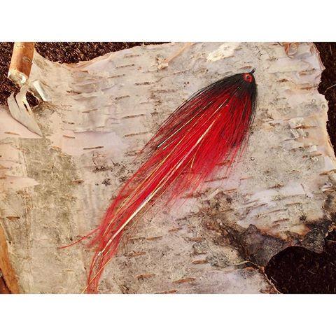 The emperor!!! @ahrexhooks PR320 6/0. • •  #ahrex #ahrexhooks #deceiver #baitfish #streamer #hollowfleye #hollowflies #perhokalastus #perhonsidonta #flytying #fluefiske #flyfishing #fluebinding #toothycritters #flydressing #pikefly #pikeflyfishing #saltwaterflies #wexwaters