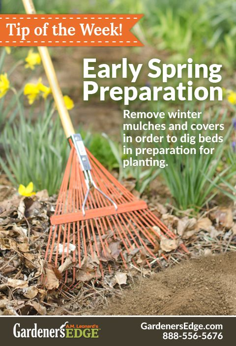 Garden Tips For March And April Once The Spring Weather Seems To Be Settling In