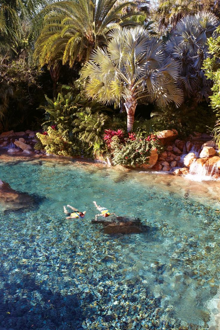 Save money on your trip to Discovery Cove with Undercover Tourist!