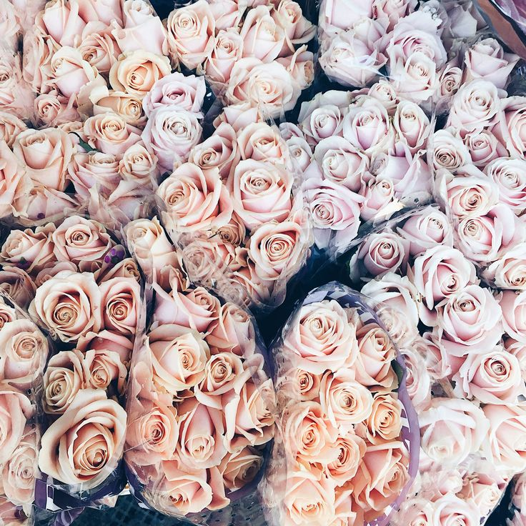 We love pink flowers. Roses sure are our favorite.