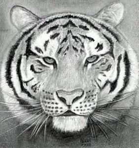 How to Draw a Tiger Head, Step by Step, Realistic, Drawing Technique, FREE Online Drawing Tutorial, Added by finalprodigy, July 22, 2011, 2:12:01 pm