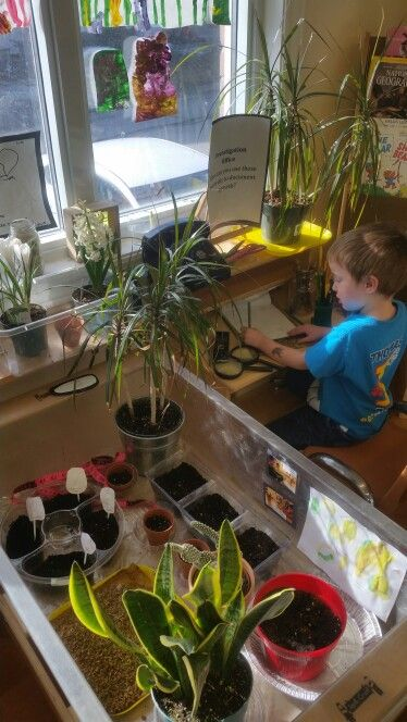 At the investigation station documenting their plants growth!