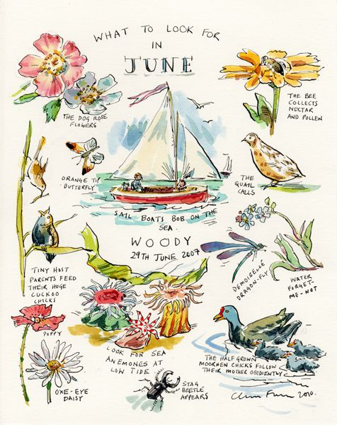 What to look for in June ~ Claire Fletcher Artist