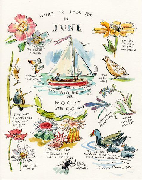 Claire Fletcher #June #illustration #art #design #illustrator #artist #designer #funny #picture #animal #cute