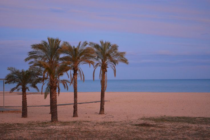Palm trees in sunset in Mataró