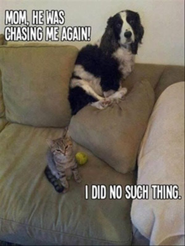 cats and dogs - the blame game. www.bowendogranch.com