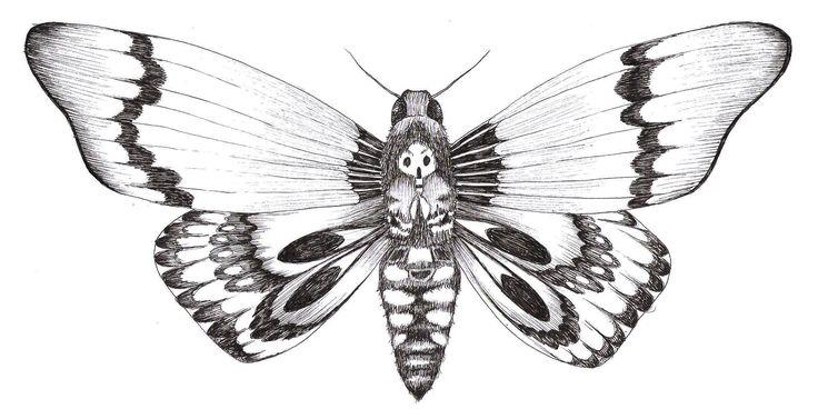 dessin d 39 un papillon sphinx t te de mort drawing of a butterfly death 39 s head moth art. Black Bedroom Furniture Sets. Home Design Ideas