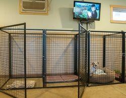 15 best Kennels images on Pinterest | Dog kennels, Pets and Dog ...