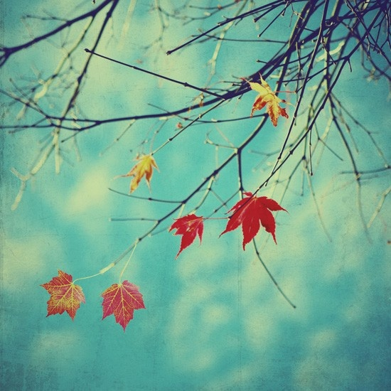 Last Leaves of Fall  4x4 fine art photo by elgarboart on Etsy