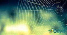 Repelente de arañas casero, ¡apunta!
