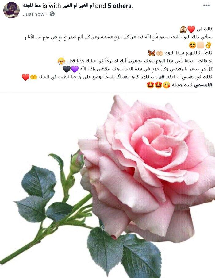ابتسمي Flowers Rose Plants
