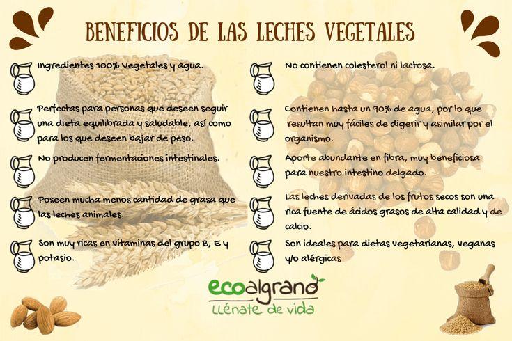 Beneficios de las leches vegetales Mercado Cúrcuma