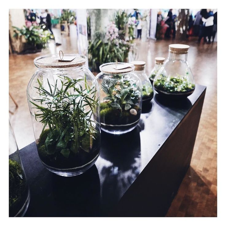Kiedyś też będę takie miała na biureczku. A póki co jaram się tymi  ______________ #green #plants #wood #floral #kwiaty #kwiatysapiekne #rośliny #rosliny #zieleń
