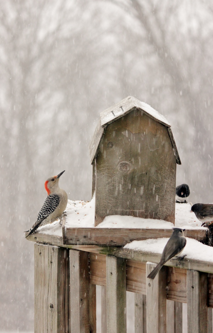 Blizzard Birds don't quit eating until dark...