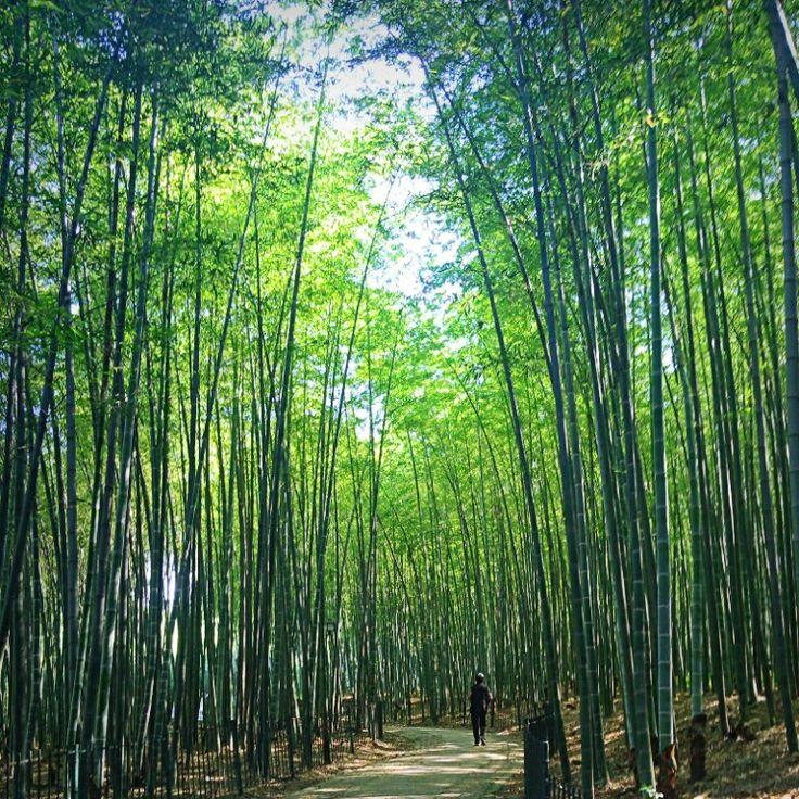 Bamboo Forest, Hangzhou Botanical Garden