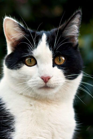 0b69213d09959e9275f0c9b769c3ee39--pretty-cats-beautiful-cats.jpg