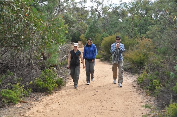 Walking track to Hollow Mountain