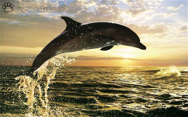 Index of /image/fish/dolphine/large_picture