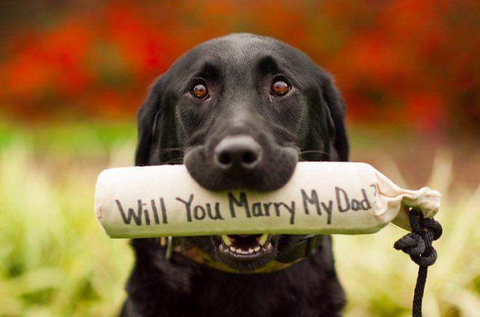7 Marriage Proposal Ideas Involving Cute Animals   Cuteness.com