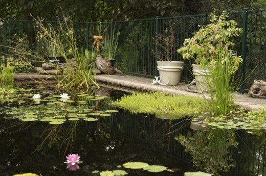 Pool to pond conversion for wildlife