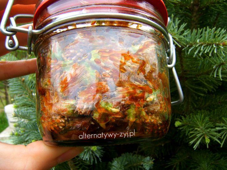 Syrop z sosny na kaszel