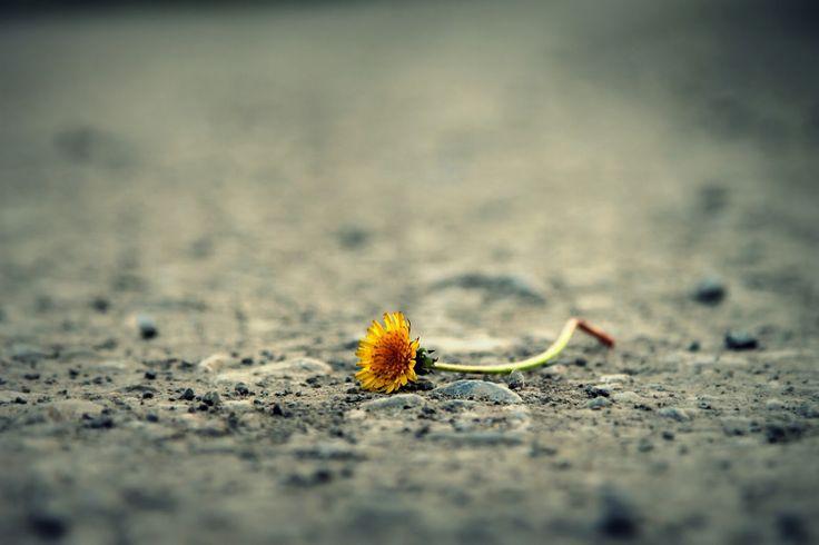 Blogikirjoitus, jossa on ratkaistu elämän tarkoituksen yksinkertainen kaava. Elämän tarkoitus on itkeä yöt kun korvaan sattuu. Elämän tarkoitus on syödä puuroa koko naamalla ja kierrättää kaikki eteen tuleva suun kautta. Elämän tarkoitus on oppia joka päivä uutta ja tarkistaa huomattiinko se varmasti.  Elämän tarkoitus on kaatua pyörällä. Elämän tarkoitus on kävellä silmät kiinni päin puuta. Elämän tarkoitus on tuntea, etteivät kesät lopu ikinä...