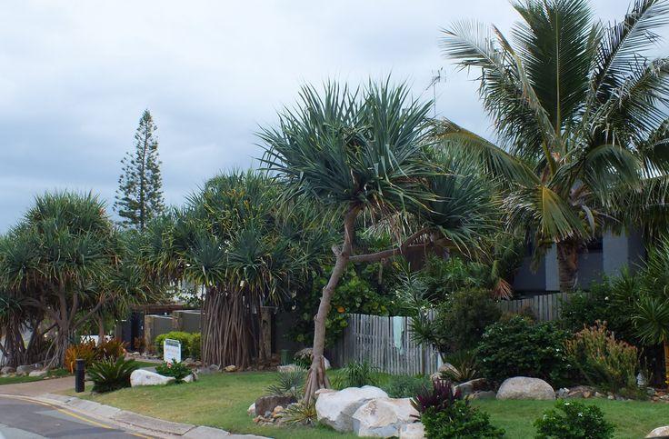 Sunshine beach home