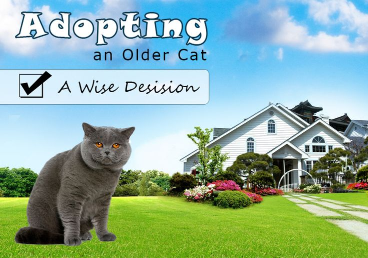 Adopting older cats is a wiser decision as you not only #savealife but also find a well-behaved, disciplined, mature and low maintenance furry companion, Read more: http://bestvetcare.com/blog/adopting-older-cat-wise-decision/ #adoption