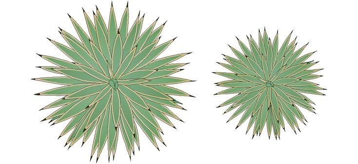 Dwg Adı : Agave bitkisi çizimi  İndirme Linki : http://www.dwgindir.com/puanli/puanli-2-boyutlu-dwgler/puanli-bitki-ve-agaclar/agave-bitkisi-cizimi.html