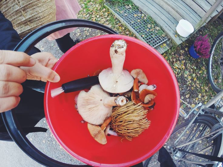 Mushrooming with VAASAA Magazine, Helsinki, Finland