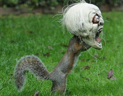 Vicky Freeman filled this spooky head with treats and hung it in her backyard in the town of Fareham, Hamshire, England. It didn't take long for an inquisitive squirrel to check it out and.#squirrel #squirrels #squirrell #squirrely #squirrellove #squirrellife #squirrelsofig #squirrelgirl #squirrelhunting #squirrelsquad #squirreldog #squirrelhill #squirreltv #squirrelmonkey #squirrelmom #squirrelfriends #squirrellover #squirrelboy #squirrelly #squirrelhunter #squirrelfriend