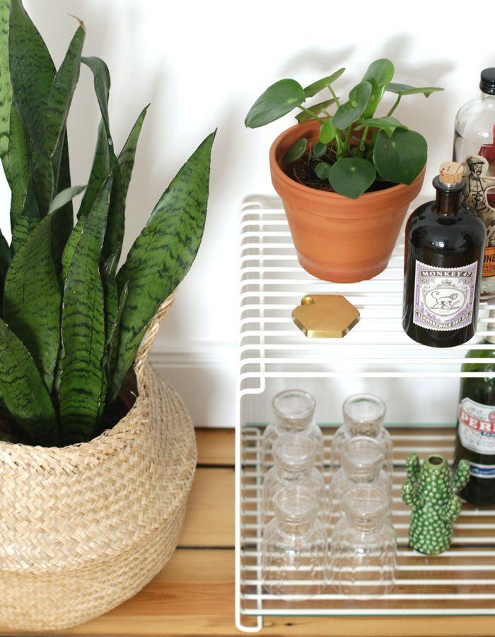 308 besten wohnen mit zimmerpflanzen urban jungle bilder for Zimmerpflanzen arrangieren