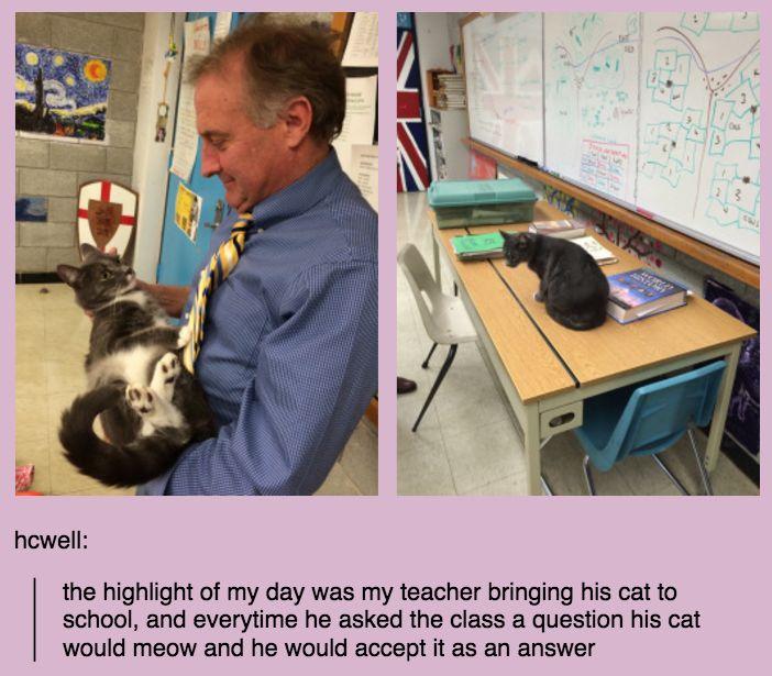 Et ce professeur qui a emmené son chat dans sa classe.