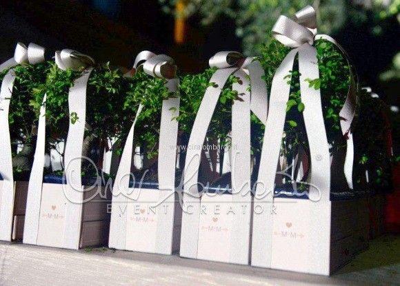 Originali bomboniere con bonsai
