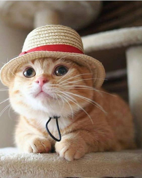 Pin By Melanie Gens On Adorable Animals Cute Cats Beautiful Cats Baby Animals Funny