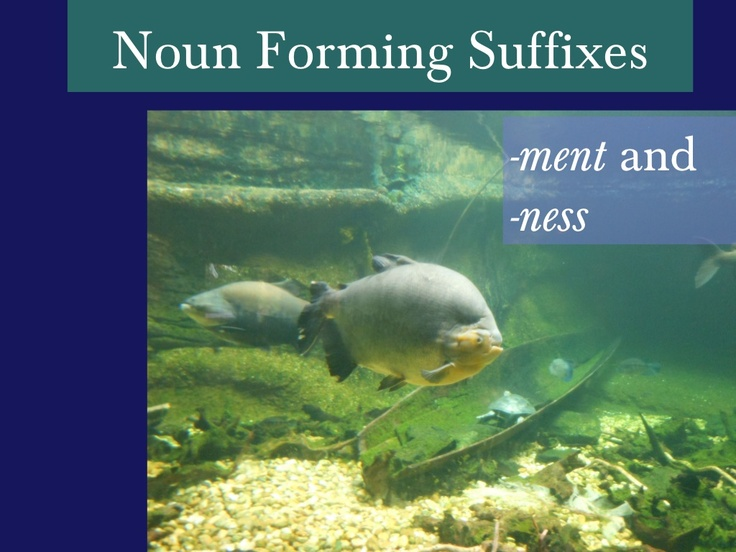Noun Forming Suffixes -ment and -ness by Emily Kissner via Slideshare