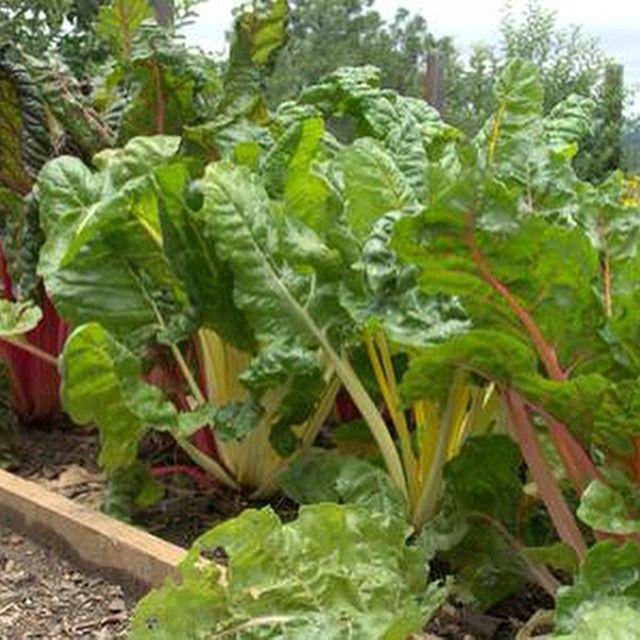 spring gardens of mossmountainfarm joy jobesorganics pallensharethebounty vegetables