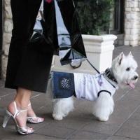 Designer Dog Breed Striped Coat