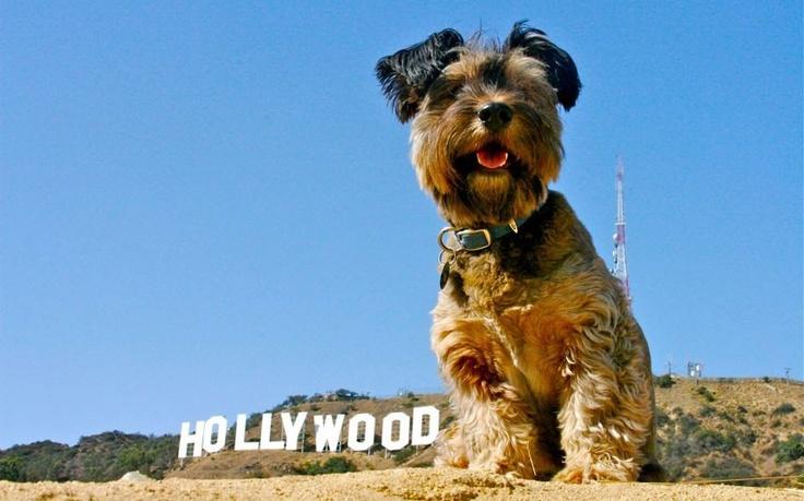 Oscar goes Hollywood